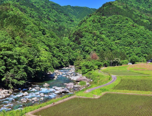 Marvelous scenery of rice field, river and forests