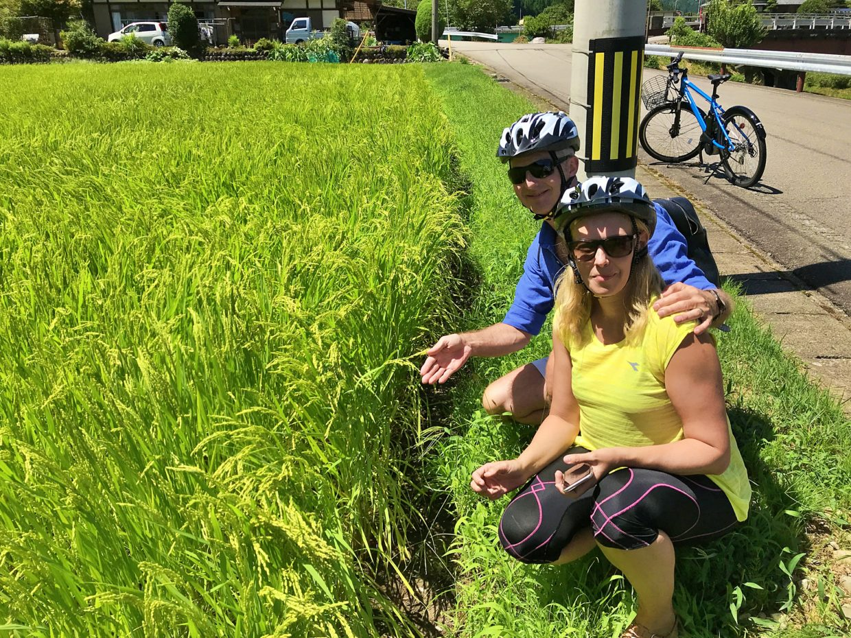 Italian tourists are pleased with seeing rice grains