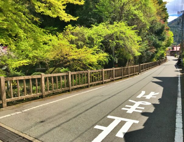 新緑が美しい田舎道